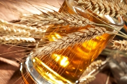 Grains and beer